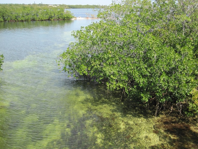 A look at the mangrove paddle trails at John Pennekamp State Park in the Florida Keys