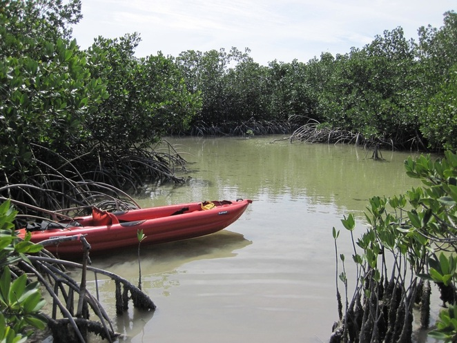 Paddling in the mangroves near Big Torch Key