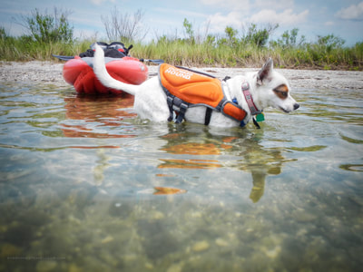 Taking a kayaking brake on the beach with the dog