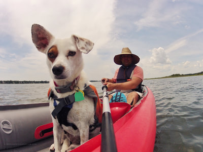 Paddling with your dog on the Crystal Coast, NC