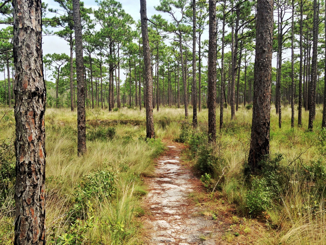 Crystal Coast hiking in the Croatan National Forest