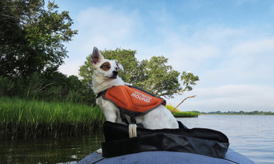 Kayaking in our Innova inflatable kayak with our dog up front