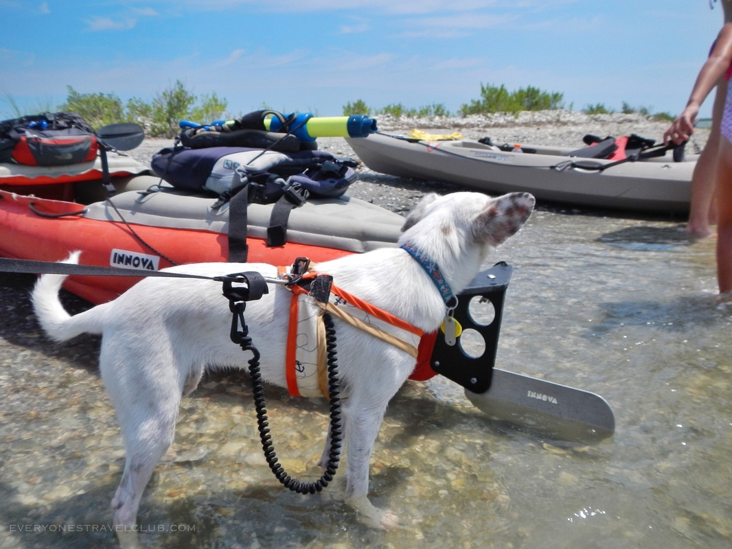 Kayaking with the dog at Hammock's Beach State Park in Swansboro, North Carolina