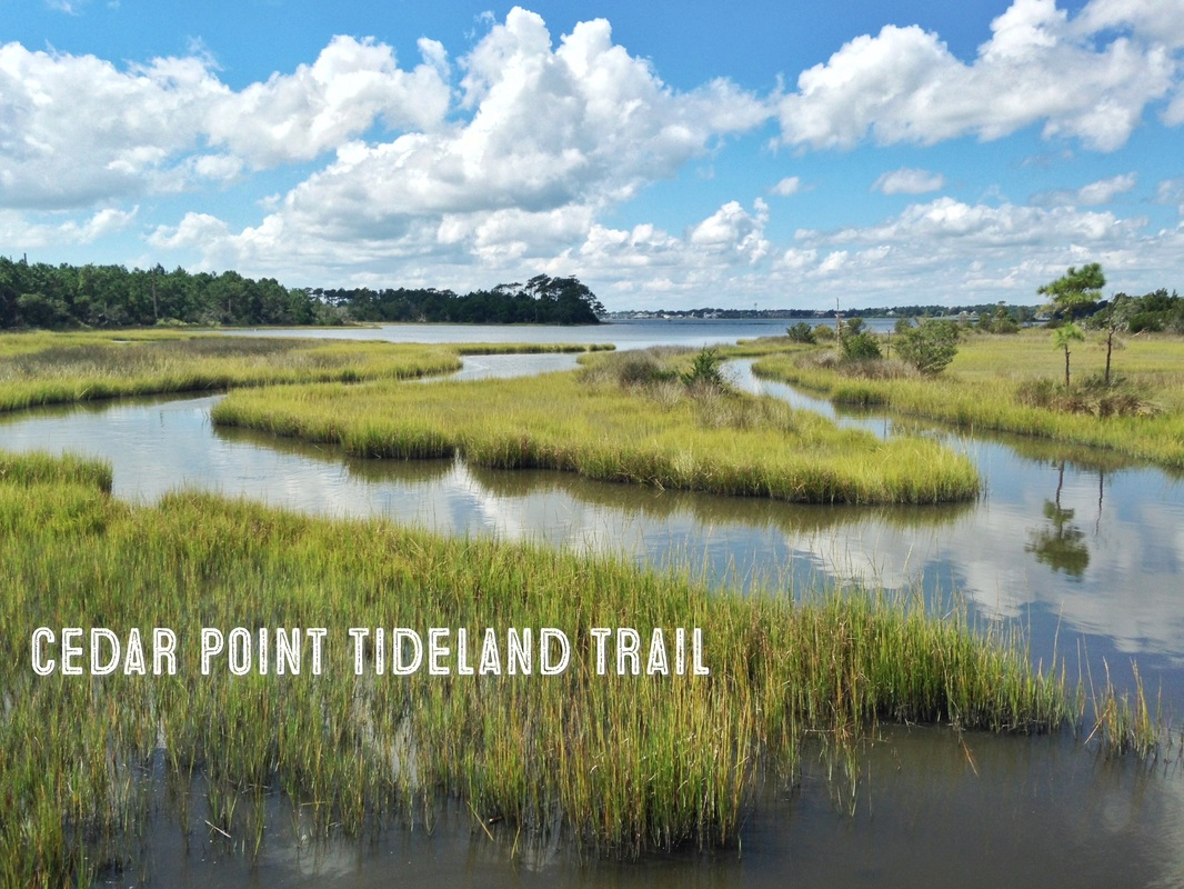 Hiking the Cedar Point Tideland Trail
