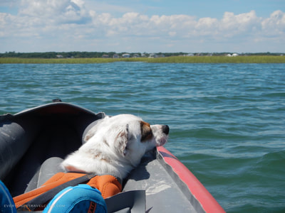 One way to get your dog on Bear Island - paddle yourself.