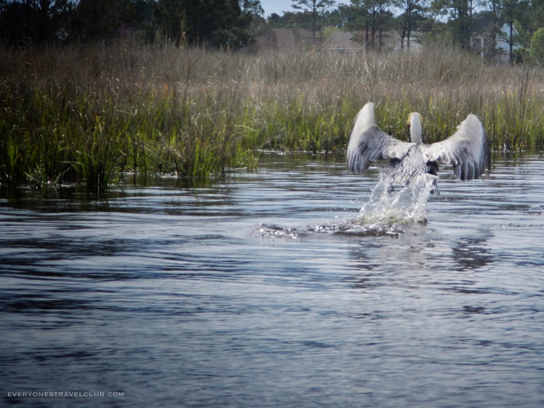Photographing water fowl on Queens Creek, Coastal North Carolina.
