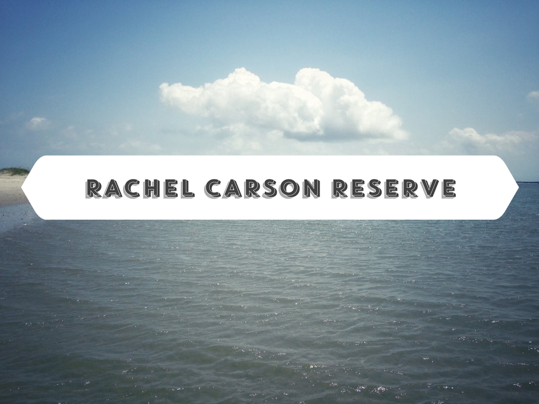 Kayaking from Beaufort North Carolina to the Rachel Carson Reserve