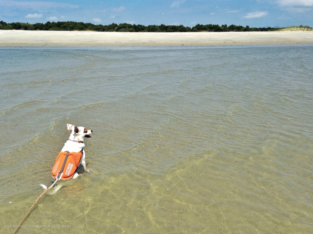 Eleanor the dog outfitted by Outward Hound, sitting in the surf on Bird Shoal, NC