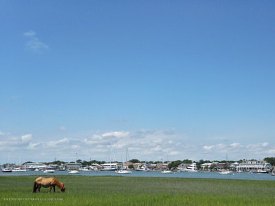 A wild horse on a barrier island of the Crystal Coast.
