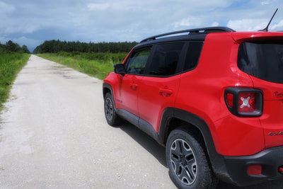 Exploring gravel roads in Eastern North Carolina's Croatan National Forest