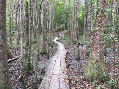 Hiking trails through the forest at Flanners Beach, located in the South's only true coastal forest east of the Mississippi.