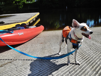 Kayaking with the mutt (wearing her Outward Hound doggie PFD).