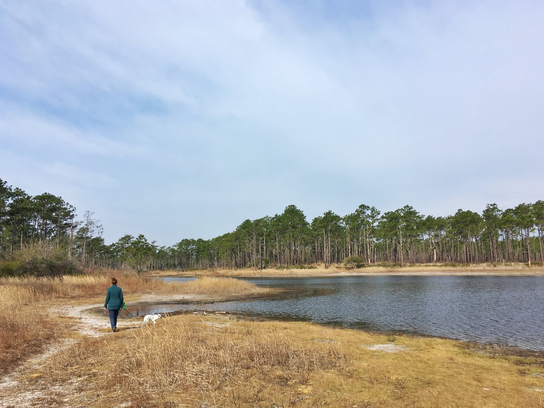 Hiking on the Patsy Pond Nature trail, managed by the NC Coastal Federation and the National Forest Service