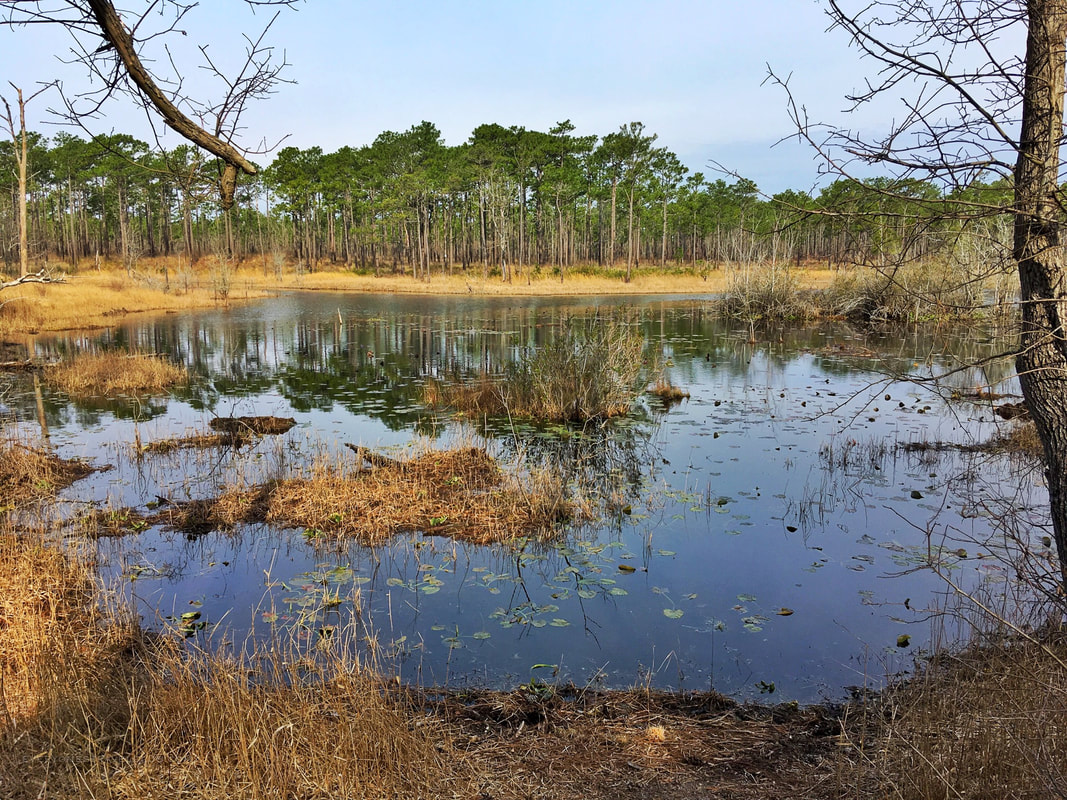 Patsy Pond in the Croatan National Forest, NC