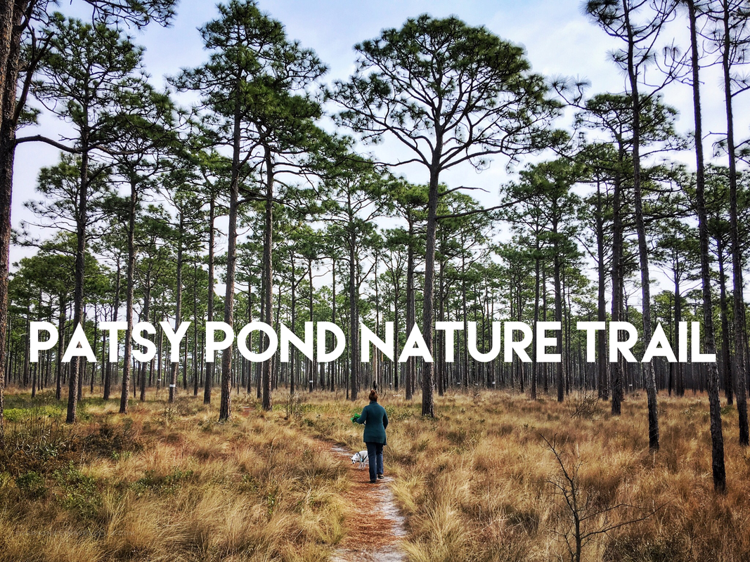 Hiking the Patsy Pond Nature Trail in Carteret County, North Carolina