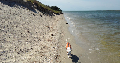 Bring your dog to a private Crystal Coast beach!