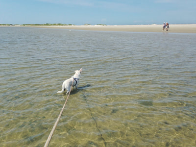 Swimming with our dog on Emerald Isle, North Carolina