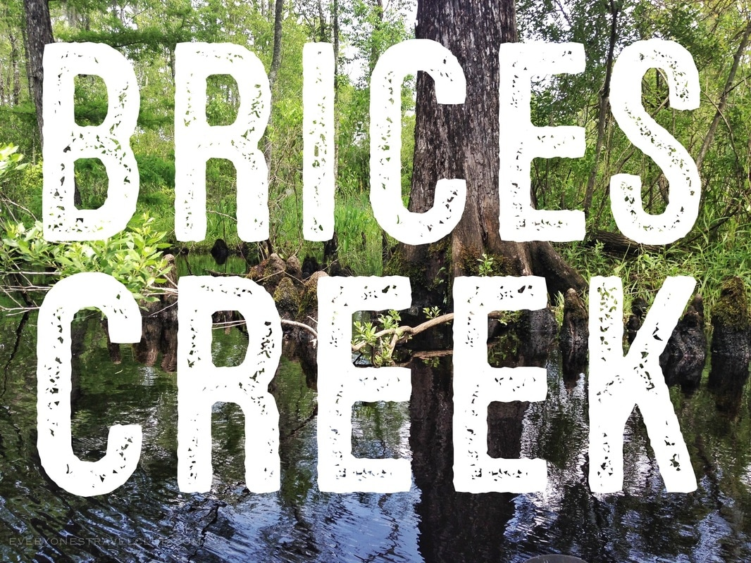 Everyone's Travel Club paddles Craven County's popular Brices Creek from Perrytown to Creekside Park.